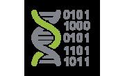 Профиль ДНК
