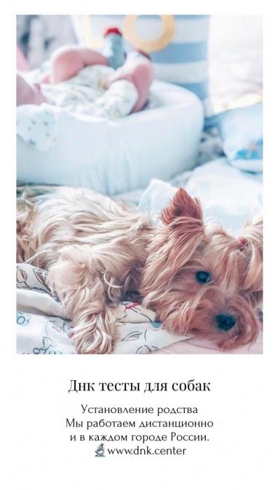 Днк анализ для собак