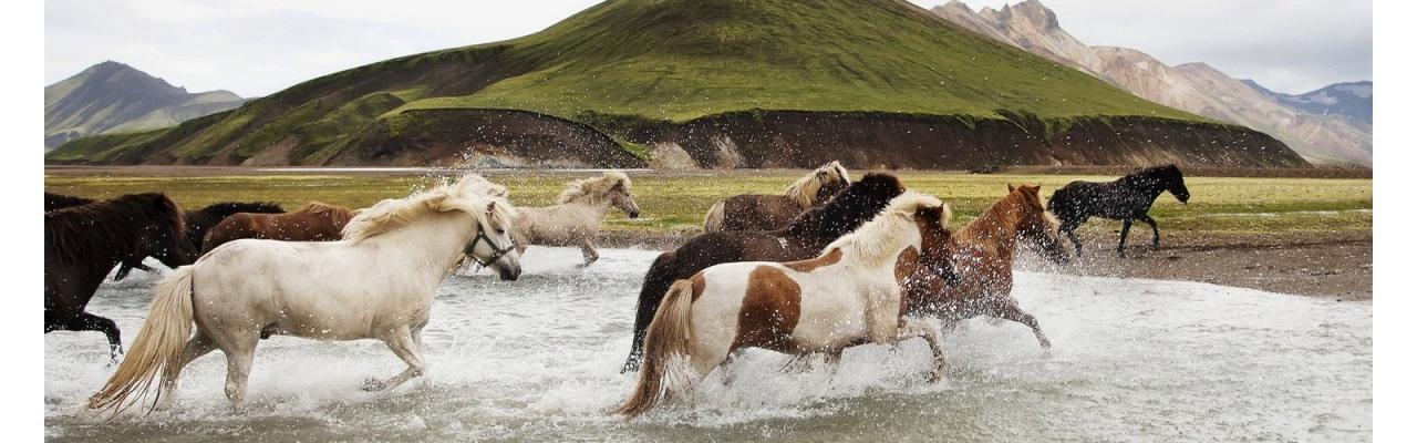 ДНК Анализ на Установление Родства Лошадей