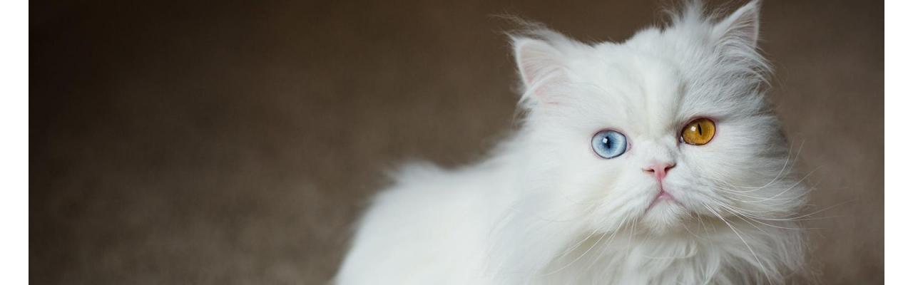 Установление родословной кошек