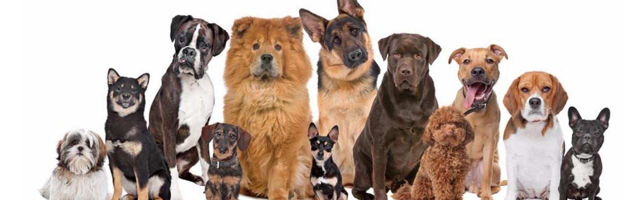 Тест ДНК на установление родословной  собаки