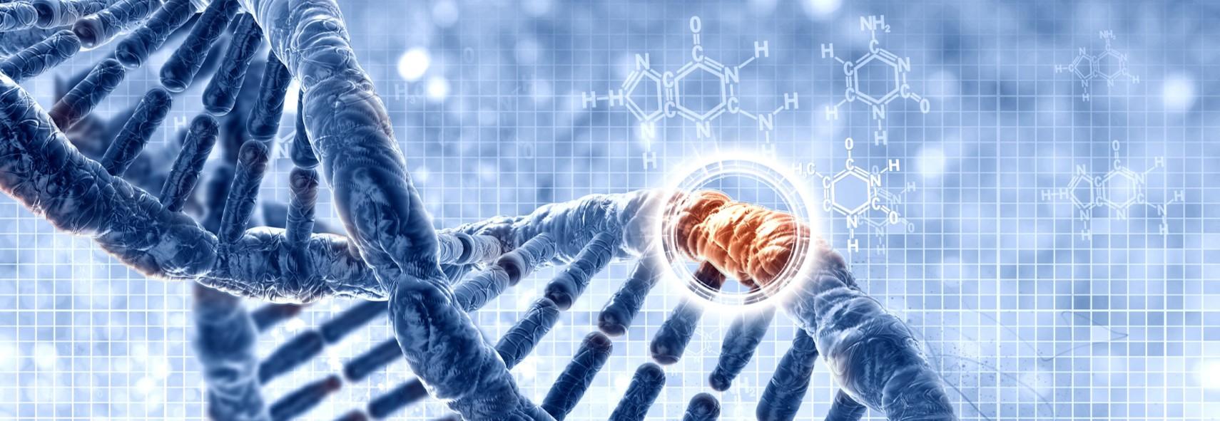 Где находится ДНК?